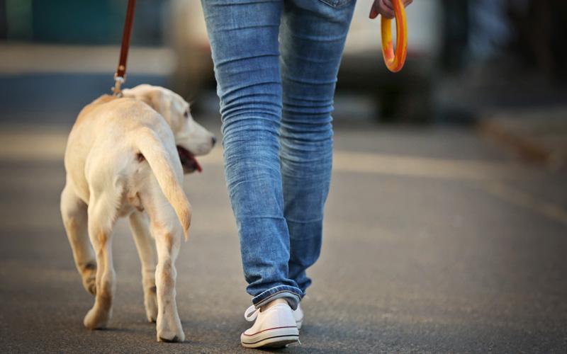 Cincinnati Pet Sitting Dog Walking Overnight Pet